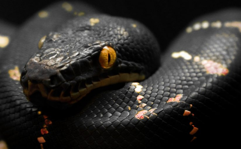 ws_2013_Year_of_The_Black_Snake_1280x1024